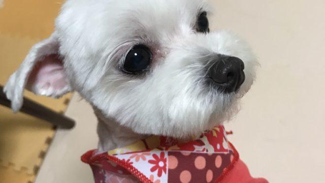スカーフをした犬